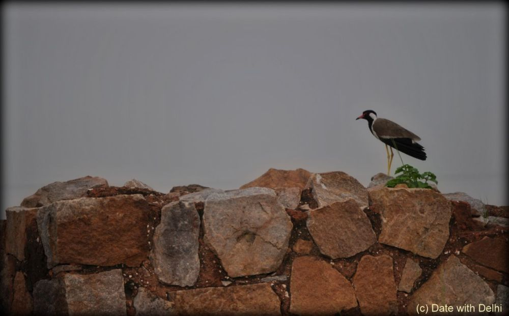 Bird sitting on fort wall